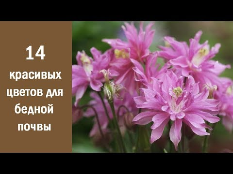❀ 14 красивых и неприхотливых цветов для бедной почвы
