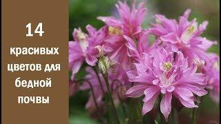 14 красивых и неприхотливых цветов для бедной почвы