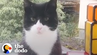Cat Decides To Move Into This Guy's House | The Dodo Cat Crazy