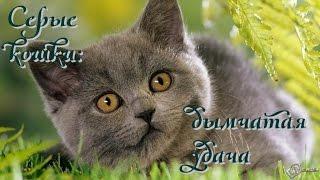 Серые кошки: дымчатая удача
