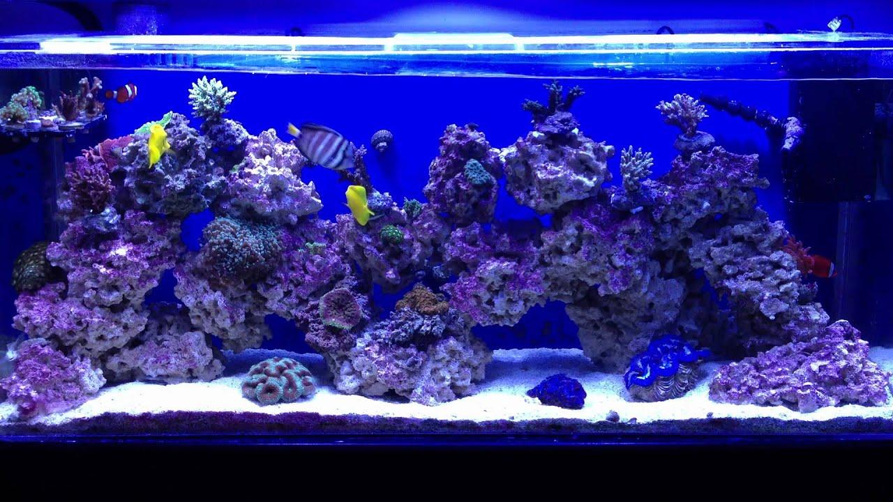 Aquarium fish tank wavemaker - Aquarium On 3 19 12 Wave Maker At Full Power