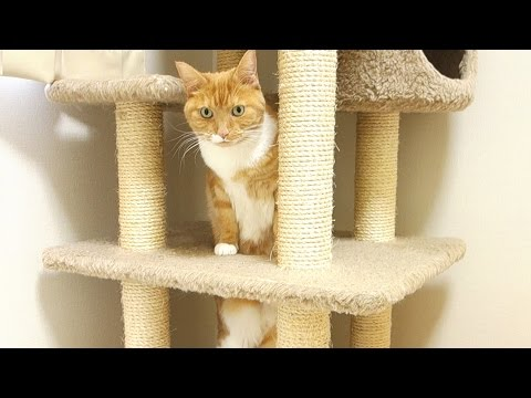 funny cat fail – cat fall into hole /  【猫 おもしろ】猫がうっかり穴に落ちる