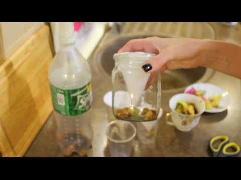 #Мошки дроздофилы. Как избавиться от мух на кухне. #Лайфхак.
