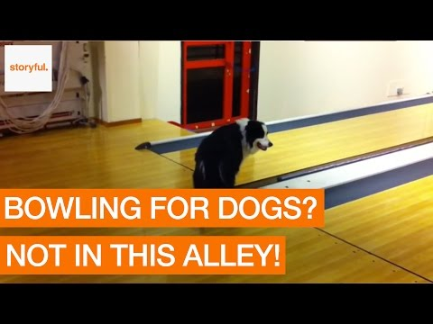 Curious Dog Goes Hysterical at Bowling Alley Buzzer (Storyful, Dogs)