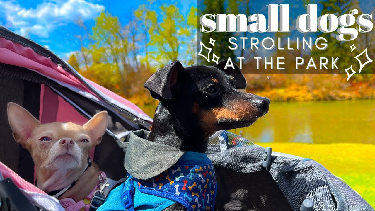 Strolling At The Park With Small Dogs | Vlog
