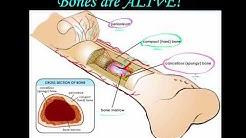 Bones are alive