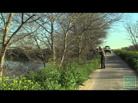 Birding in a Natural Wasteland - Texas Parks and Wildlife [Official]