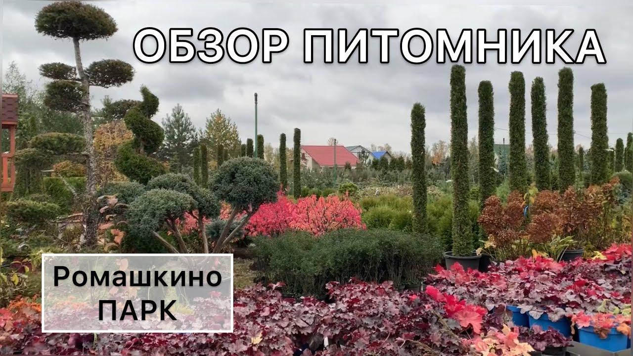 Выбор растений для сада. Прогулка по питомнику. Ель ПИХТА бересклет МОЖЖЕВЕЛЬНИК  #дневниксадовода