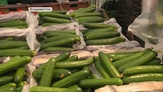 Дефицита огурцов и помидоров в Приморском крае нет - специалисты