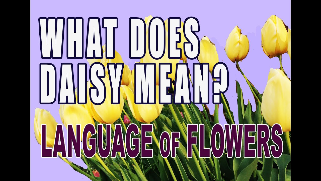 Language Of Flowers What Does Daisy Mean Youtube