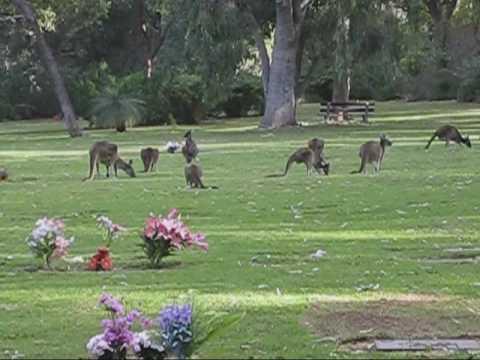Pinnaroo Cemetery Perth Western Australia Youtube