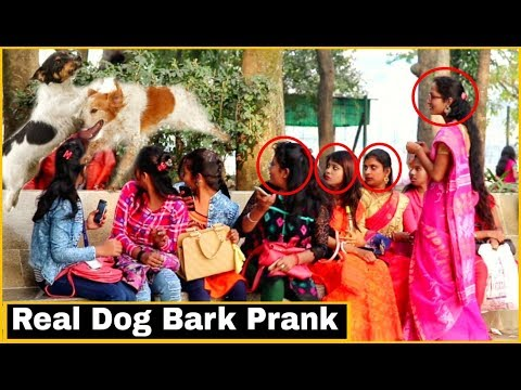 Funny Real Dog Bark Prank On Girl's - Funny Prank In India 2019 - By TCI