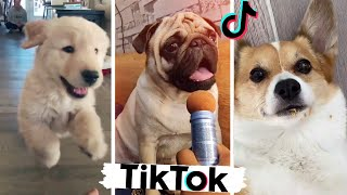Funny Tik Tok Dogs I Found Just for You ❤