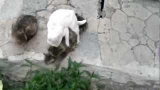 Кот гей.mp4