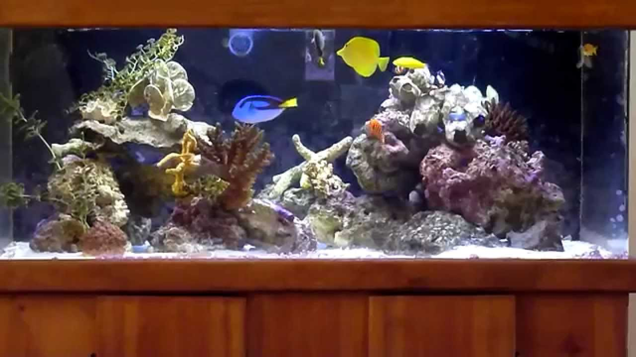 Wide 100 Gallon Fowlr Saltwater Aquarium Aquascape 2 Islands With A Channel Diagonally In