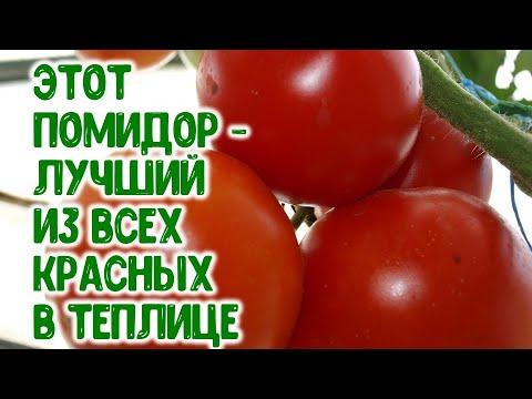 Этот помидор - лучший из красных в теплице. Урожайность  - 13 килограммов с куста в 2020 году!