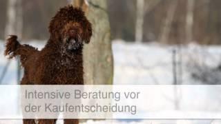 Golden Doodle Züchter - Langelsheim Dogs Of Golden-kennel - Andreas Werner