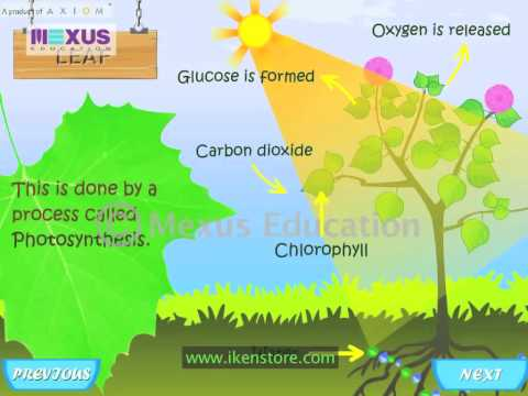Learn Biology - Parts of a Plant and its Functions