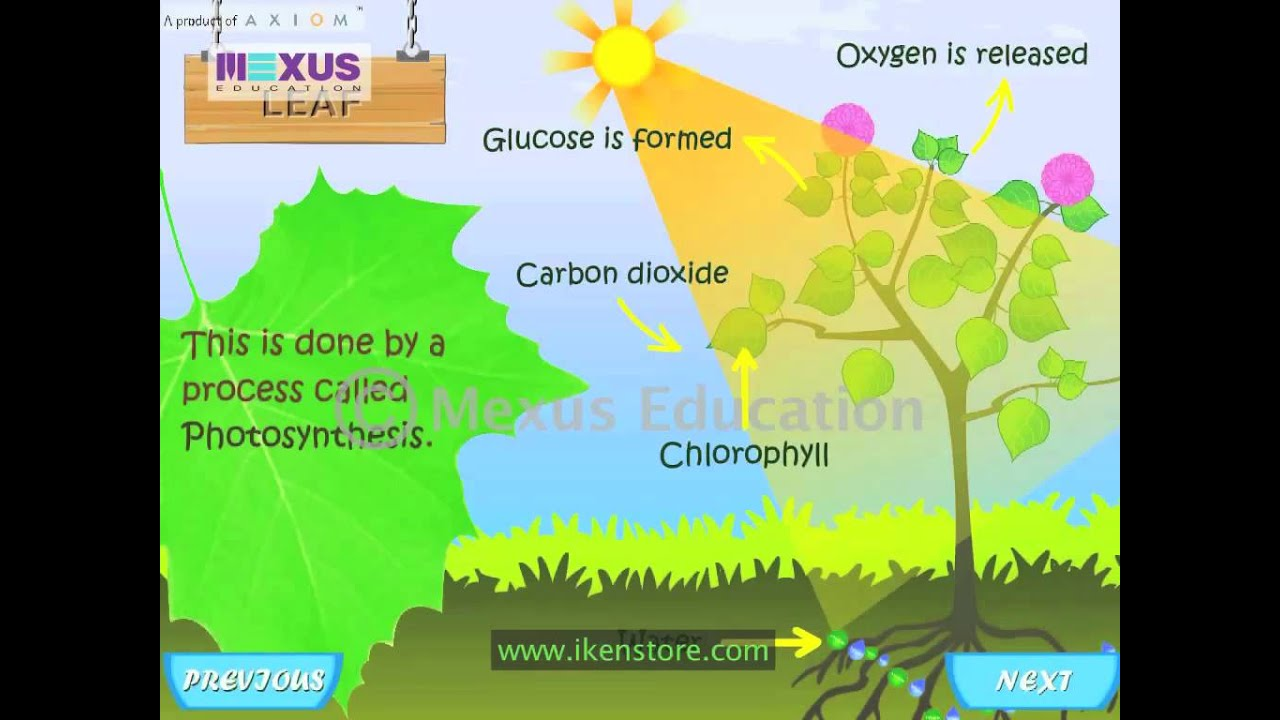 Learn Biology Parts of a Plant and its Functions