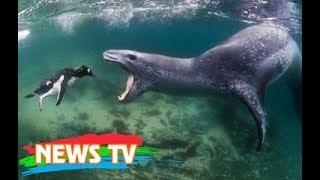 Top 10 sinh vật biển nguy hiểm nhất thế giới