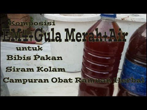 Komposisi EM4+Gula Merah+Air Untuk Bibis Pakan,Siram Kolam,Campuran Obat Ramuan Herbal