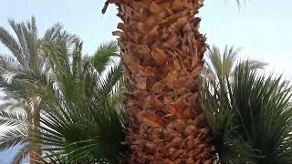 Египет пляж территория отеля Queen Sharm Resort Egypt Beach Hotel Queen Sharm Resort