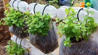 Brilliant idea | How to grow mint from recycling plastic bags for beginners
