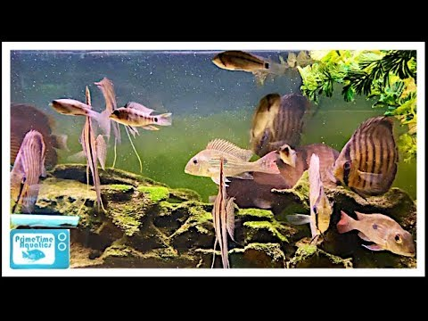 Aquatic Clarity Fish Room Tour: Awesome South American Biotopes!