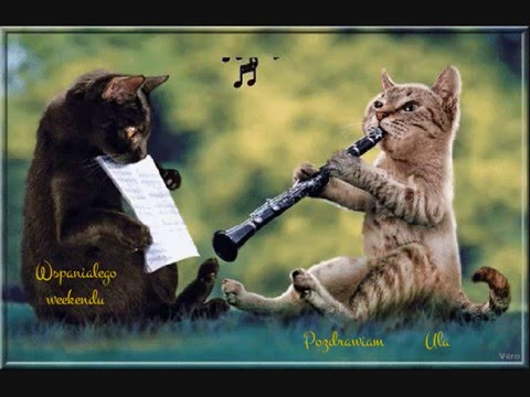Hilarious Cats Youtube