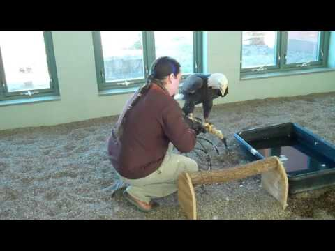 Morning chores at the National Eagle Center