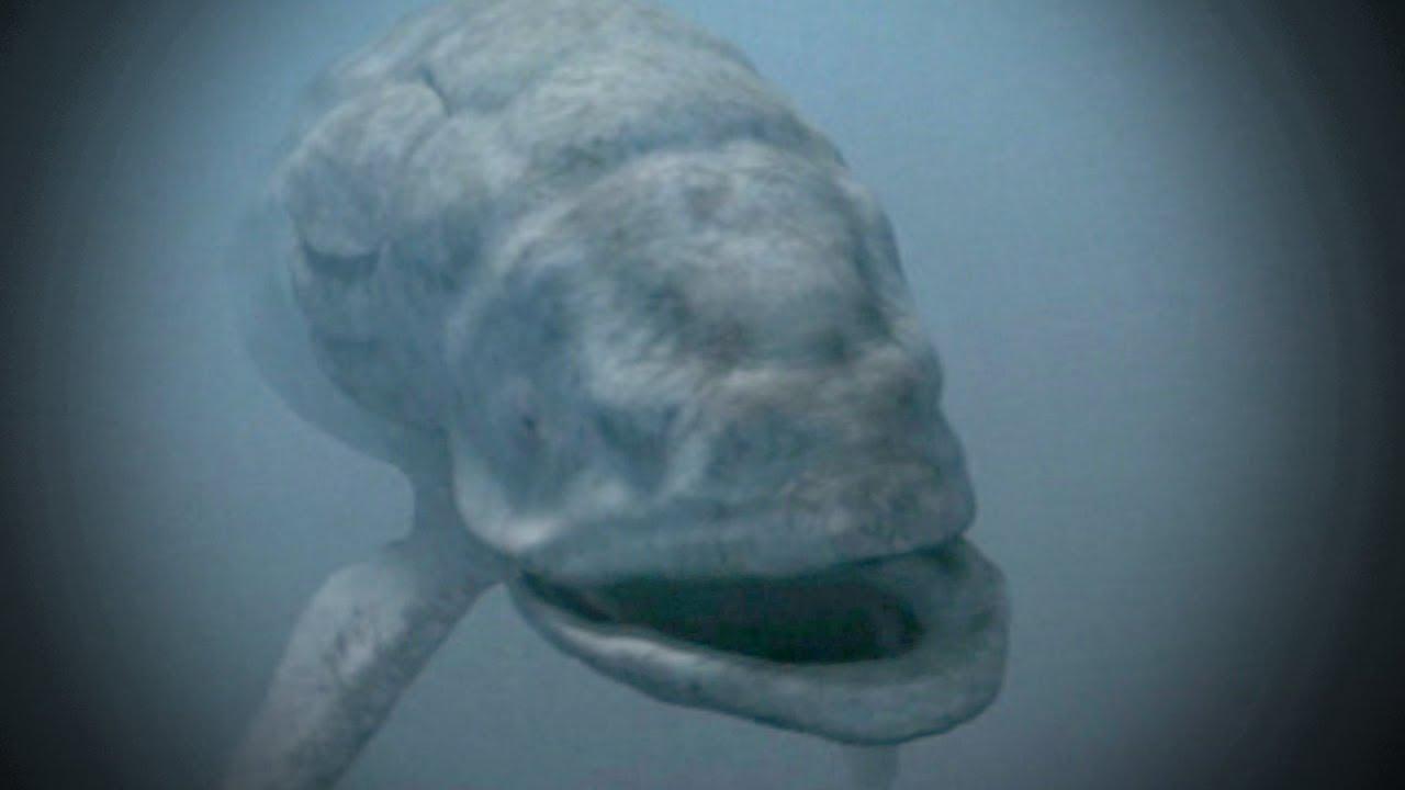 world's largest fish - youtube