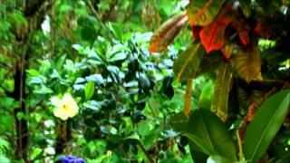 видео Цветы на балконе: особенности содержания садовых и комнатных растений на балконе