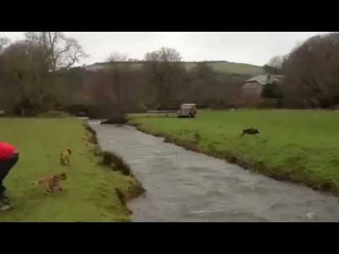 Animales saltando en trampolines Full HD from YouTube · Duration:  2 minutes 23 seconds