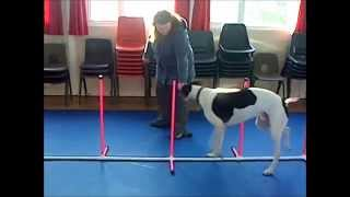 Bob Doing Agility In Improvers