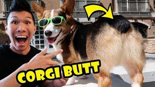 THICC CORGI BUBBLE BUTT - Incredible Views! || Life After College: Ep. 558