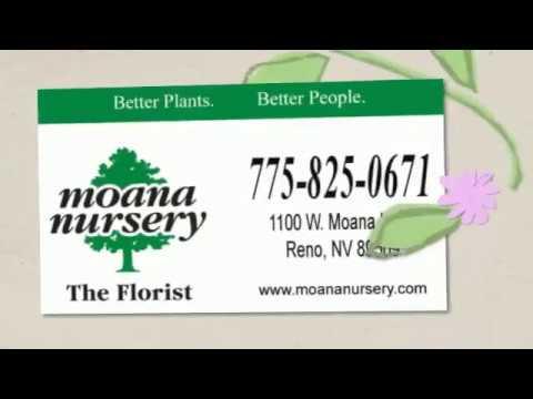Moana Nursery Florist