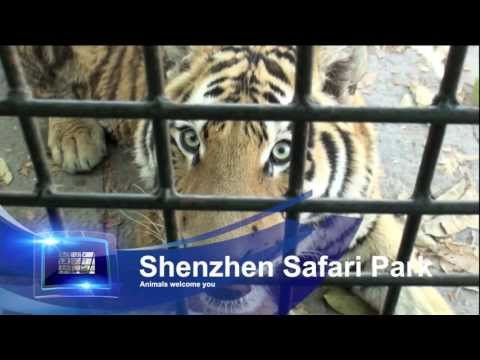 Shenzhen Safari - A short introduction
