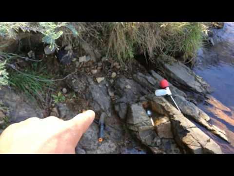 kus TV gold prospecting adventures Mitchell's Creek, Sunny Corner N.S.W, Australian day 2