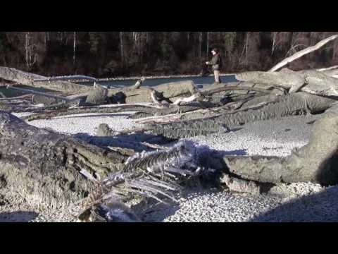 Rainbows & Frost, Part 1 Of 2,Fishing The Talkeetna River In Alaska. Part 1 Of 2