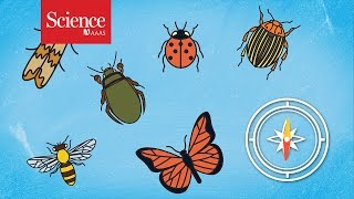 Masses of insects on the move