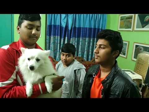 Spitz Dog @ Dr. Sagir's Pet Clinic 01912251312