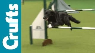 Exclusive Look At Crufts 2012's Resuce Dog Agility Contest!