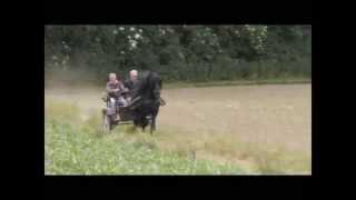 The Beautiful Friesian Horse Part 2