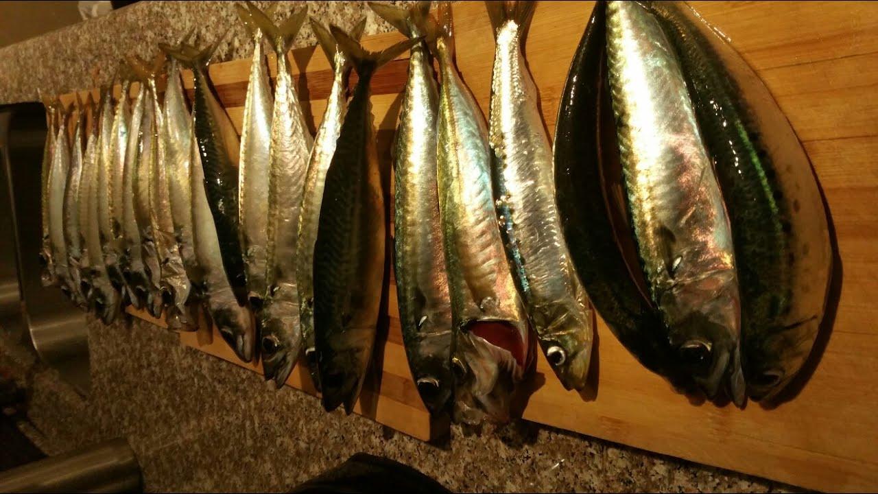 Redondo Beach Pier Fishing Youtube