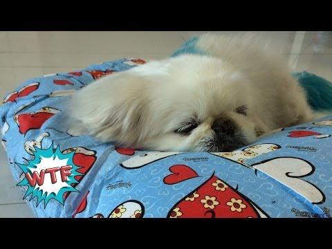 Forever Alone Boyfriend Pillow
