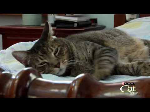 Housecat Housecall® Webisode  Emory