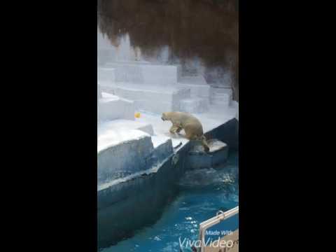Osaka zoo หมีขาว