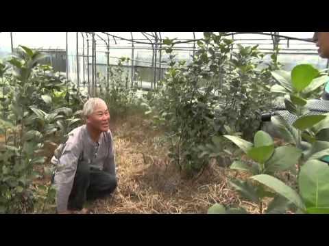 왜 '시설재배'인가?:  송광일 농장의 재미 있�