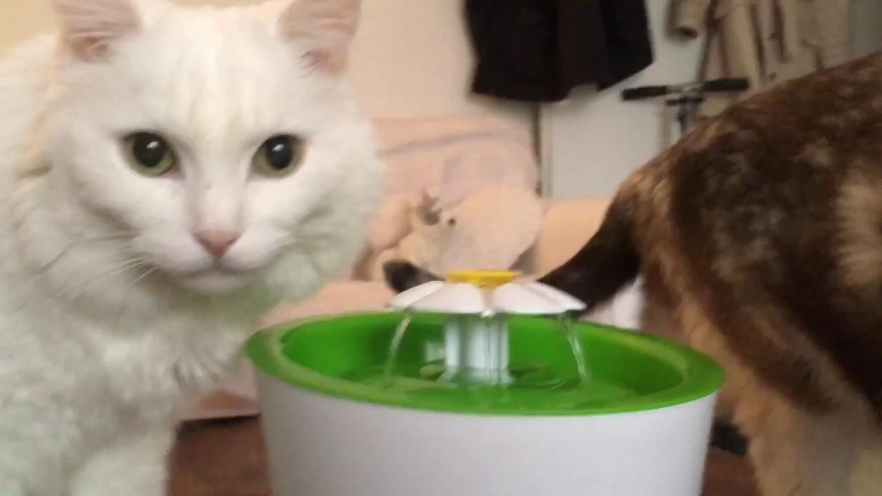 unbox fontaine eau pour chats catit youtube. Black Bedroom Furniture Sets. Home Design Ideas