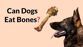 CAN DOGS EAT BONES? (Do's & Don'ts of giving dogs a bone)